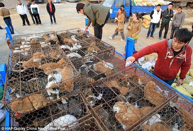 Resgatados na china 700 gatos enjaulados. destinavam-se à alimentação.