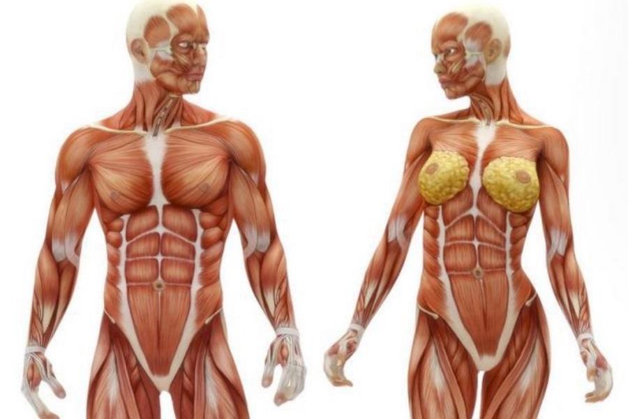 Factos fascinantes sobre a saúde e o corpo humano