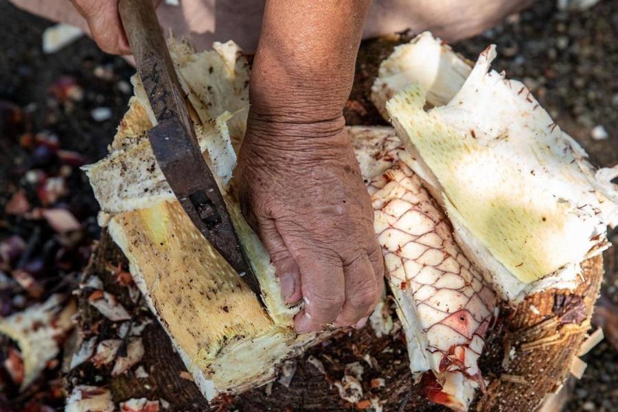 Planta tóxica salva moradores de ilha do Japão da fome