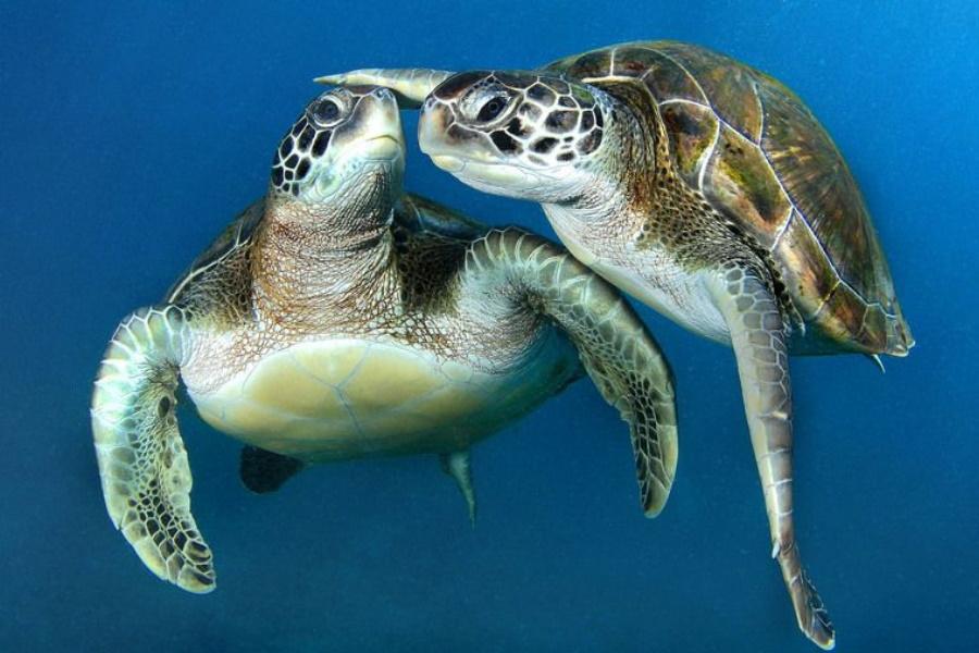 Tartaruga vive mais de cem anos porque cuida apenas da vida dela, aponta estudo