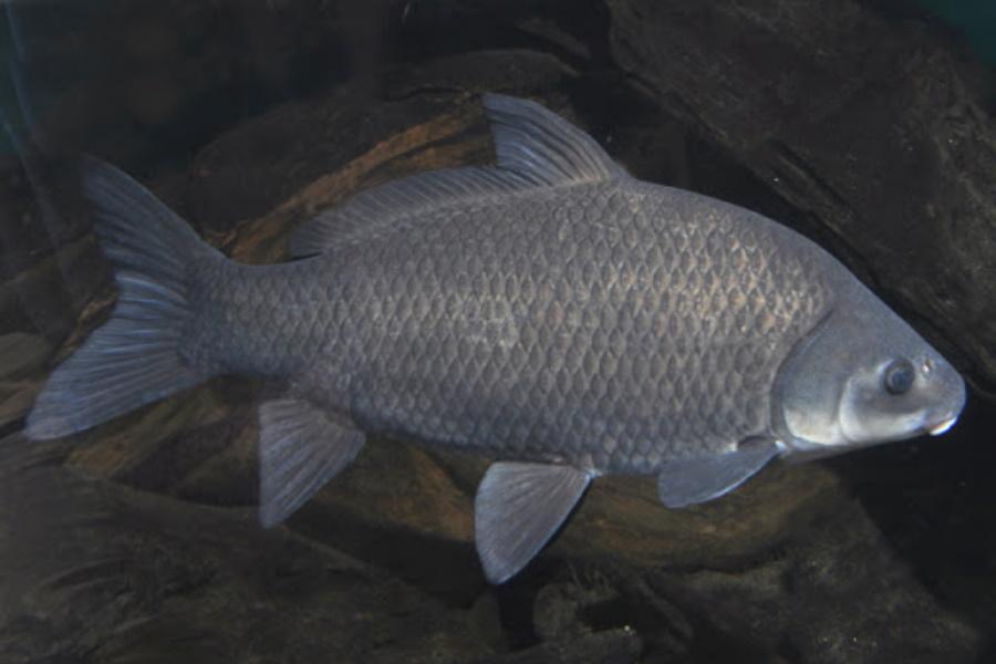 Será que o peixe dorme?