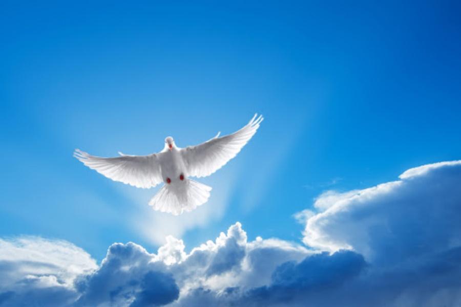 Celebra-se o dia da paz