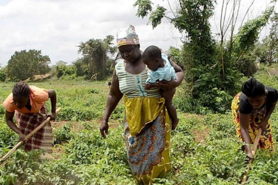 Sector agrário poderá gerar 250 milhões de dólares em 2021