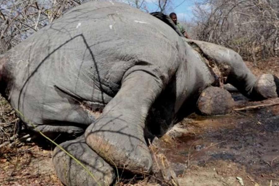 Fragilidades da Justiça facilitam impunidade de caçadores furtivos
