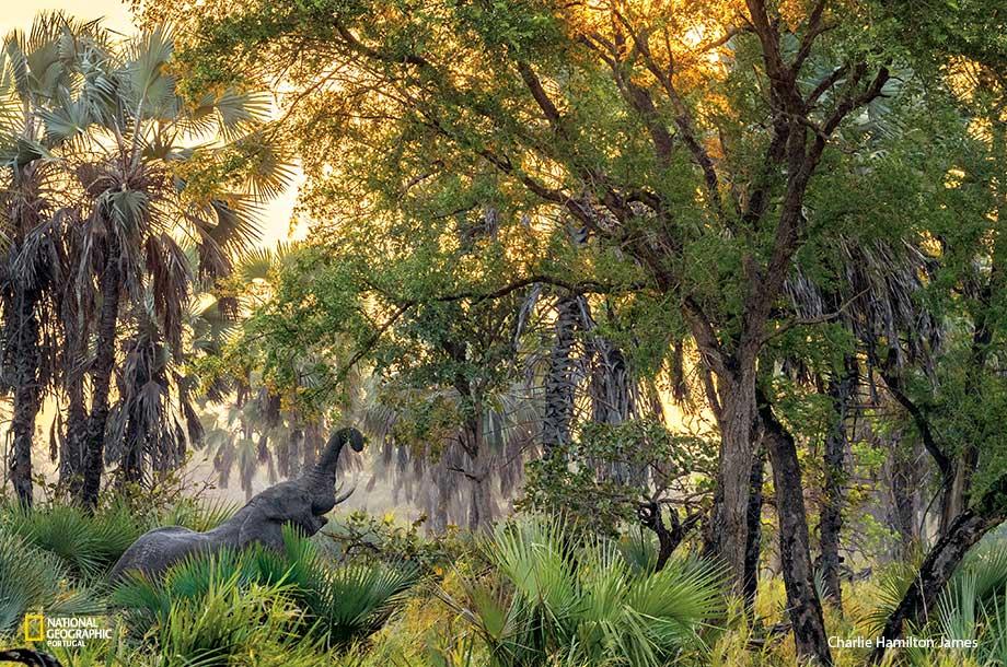 O Parque Nacional da Gorongosa adere à coligação pela biodiversidade lançada pela UE