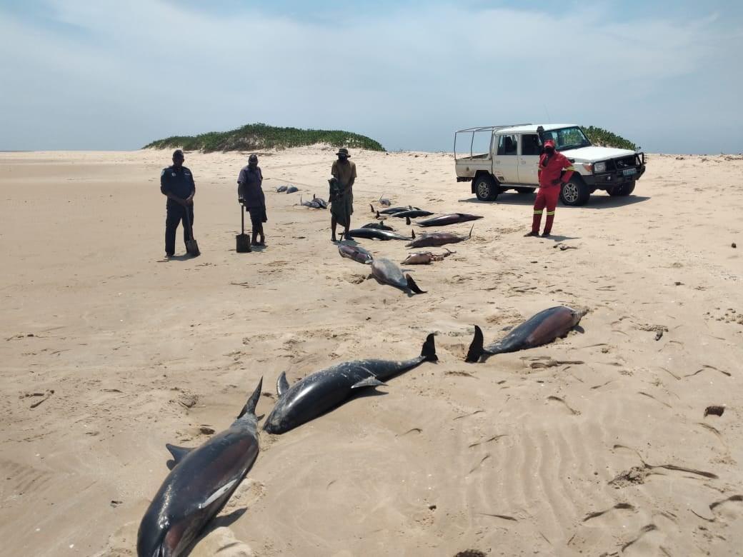 Encontrados 111 golfinhos mortos no arquipélago do Bazaruto