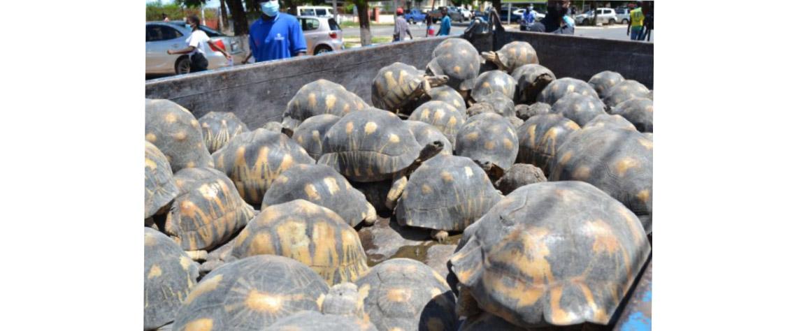 Ilha de Moçambique: Cidadão português preso por criar tartarugas marinhas em via de extinção