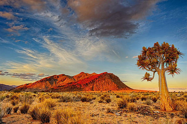 As areias do Kalahari