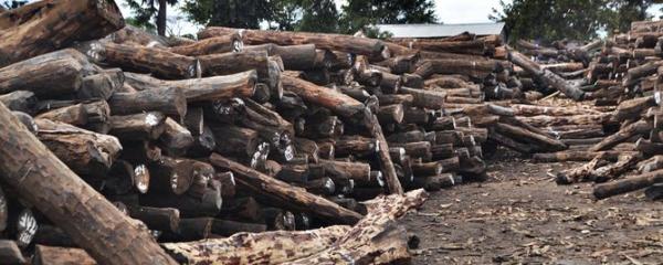 1.900 toros de madeira ilegal foram apreendidos no centro de Moçambique em 2020