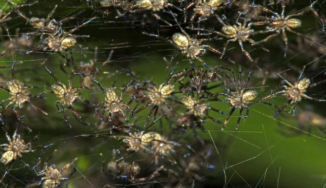 Cheias na Austália: Milhares de aranhas e cobras para dentro das casas