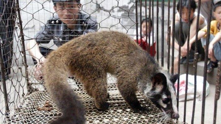 Covid-19: OMS pede suspensão mundial da venda de mamíferos vivos em mercados