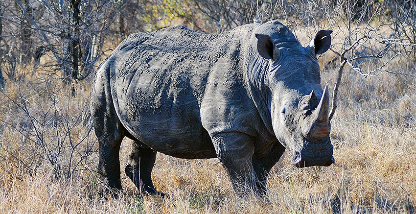 O melhor destino na África do Sul para um safári Big 5