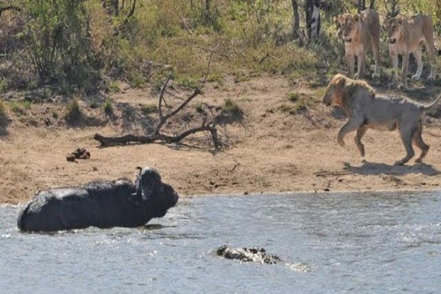 Moçambique: ataques de crocodilos, elefantes, búfalos e leões fazem 12 mortos no centro do Pais